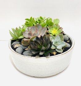 """12"""" Succulent Arrangement in White Ceramic bowl"""