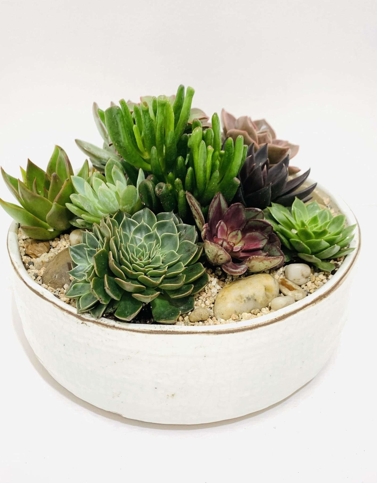 """10"""" Succulent Arrangement in White Ceramic Bowl"""