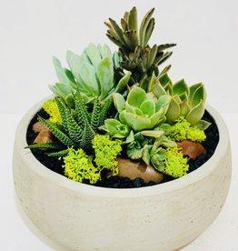 """8"""" Succulent Arrangement in Grey Ceramic Bowl"""