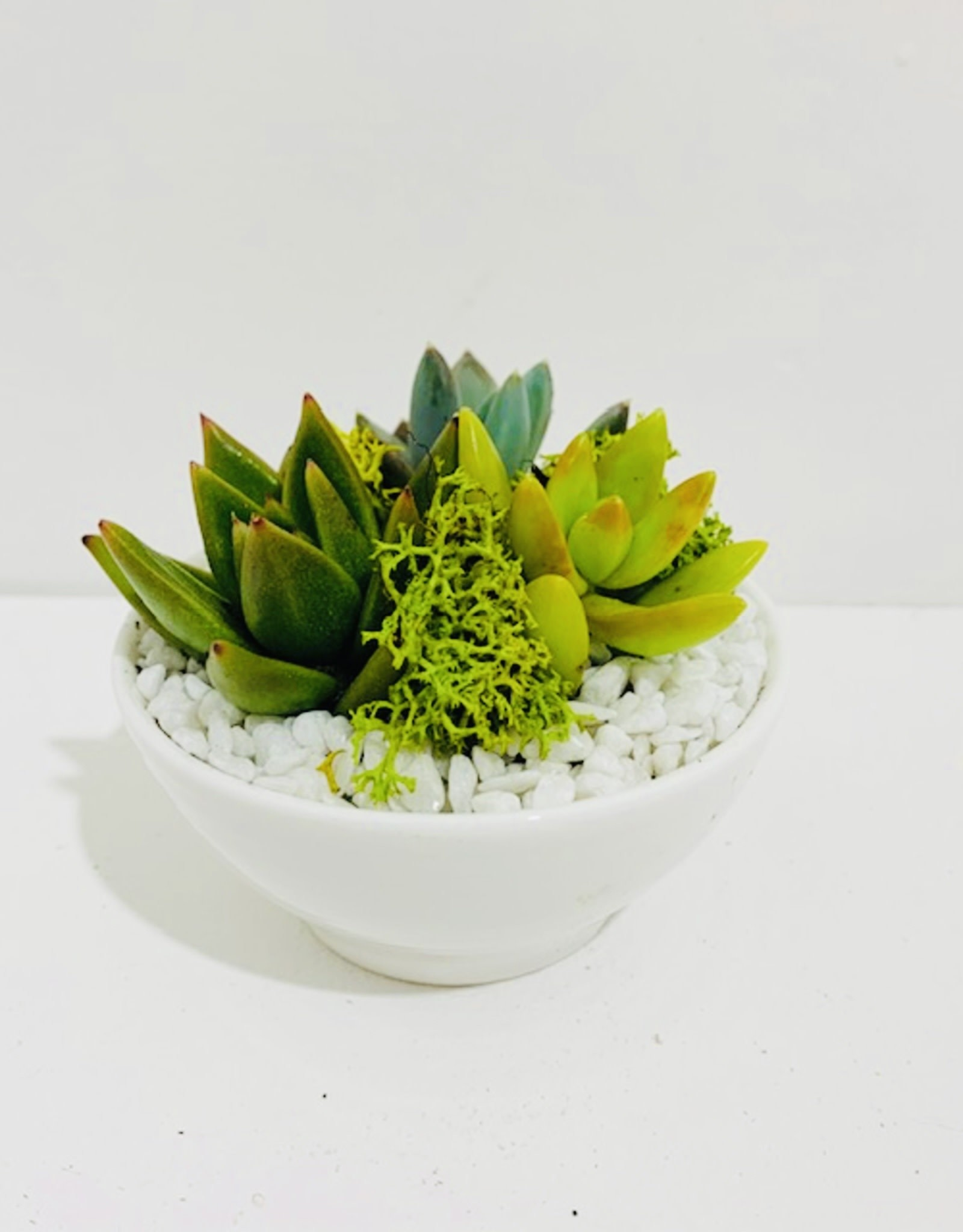 "3"" White Ceramic Bowl with 3 Succulents"