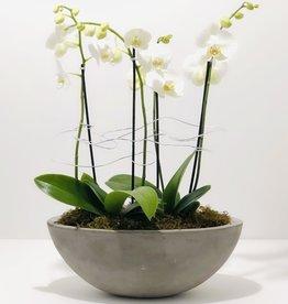 Orchid Arrangement in Cement Boat