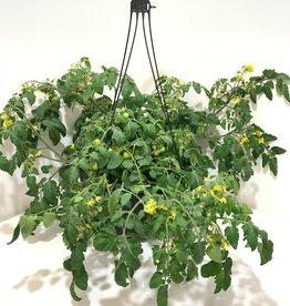 """12"""" Tomatoe Hanging Basket"""