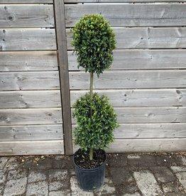 "Eugenia Topiary 2 Ball 10"""