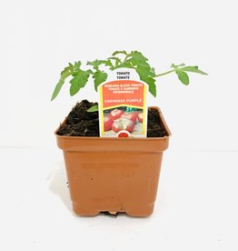 Cherokee Purple Tomato 4""