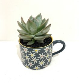 "4"" Succulent in Daisy Mug"