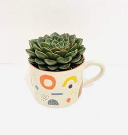 "4"" Succulent in Shapes Mug"