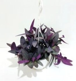"Purple Heart Hanging Basket 7"""