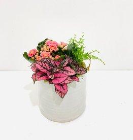 "4"" Flowering Plant Arrangment in White Pot"