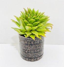 """6"""" Green Succulent in Cusco Pot"""