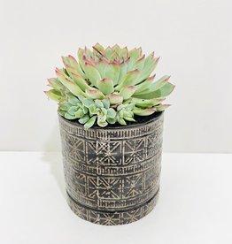 """6"""" Blue Succulent in Cusco Pot"""