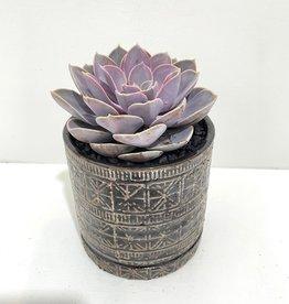 """6"""" Pink Succulent in Cusco Pot"""