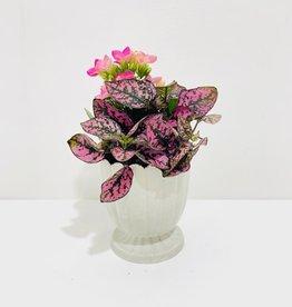 "3"" Flowering Plant Arrangement in White Scalloped Pot"