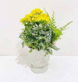 "5"" Flowering Plant Arrangement in White Scalloped Pot"