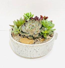 "9"" Succulent Arrangement in Dorian Bowl"
