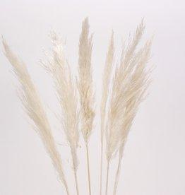 "30"" White Pampas Grass - 6 Stems/Bunch"