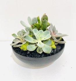 "6"" Succulent Arrangement in Black Bowl"