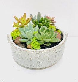 "6"" Succulent Arrangement in Dorian Bowl"