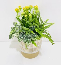 "5.5"" Flowering Plant Arrangement in Decor Pot"