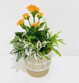 "4.5"" Flowering Plant Arrangment in Decor Pot"