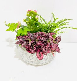 "6"" Flowering Plant Arrangement in Dorian Bowl"