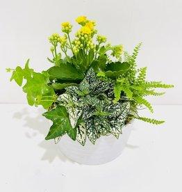 "6"" Flowering Plant Arrangement in White Bowl"