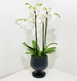 Orchid Arrangement in Black Pedestal Planter