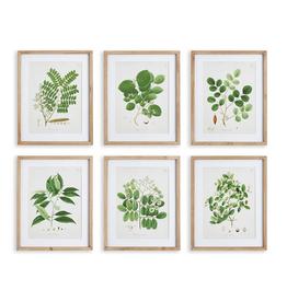 """Tree Leaf Study Print L19.75"""" W15.75"""" - 6 Assorted"""