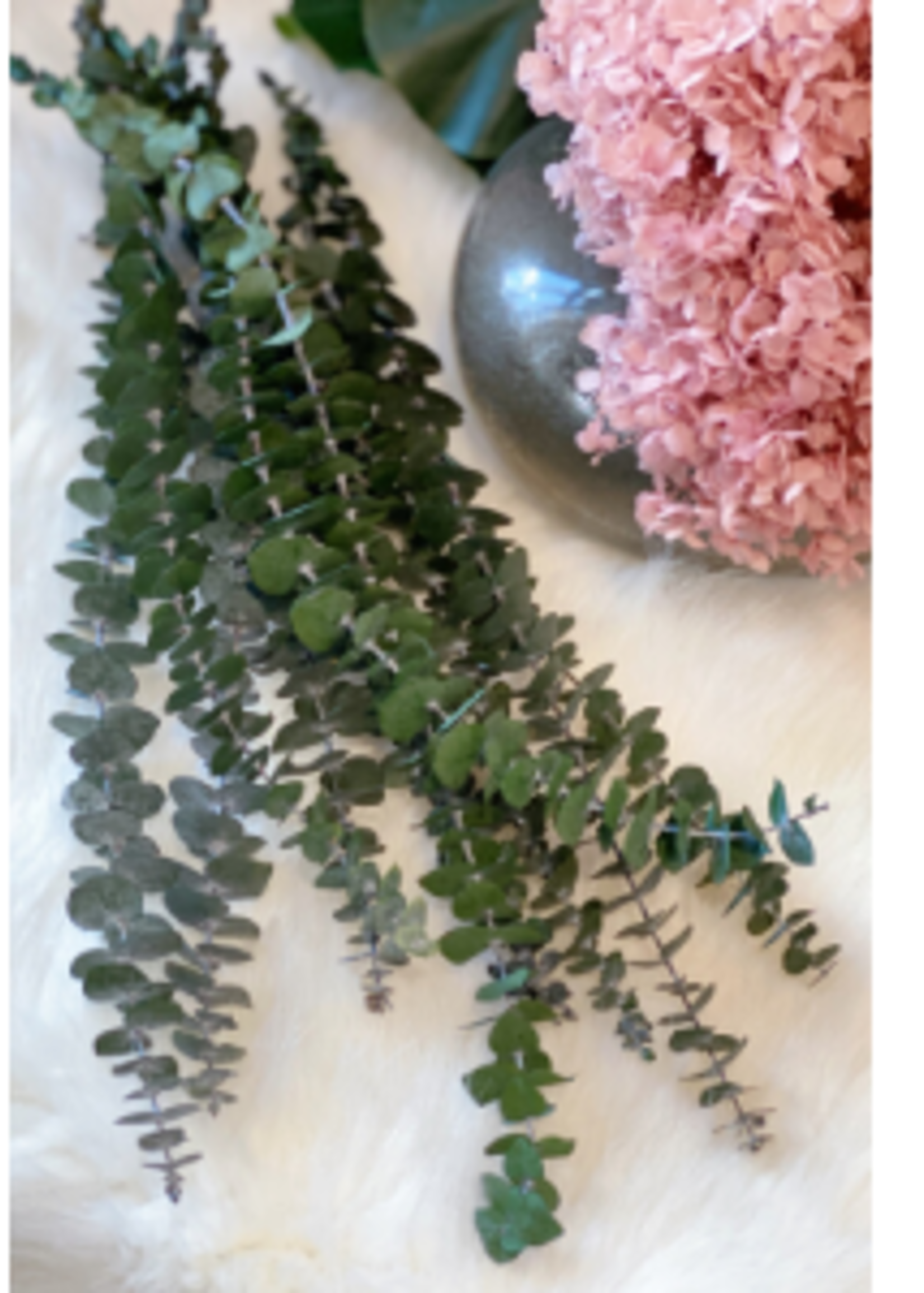 Preserved Flowers - Round Eucalyptus