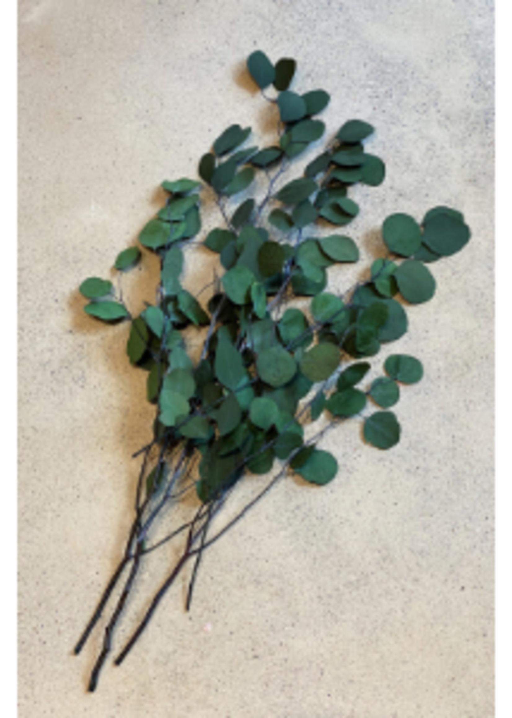 Preserved Flowers - Apple Leave Eucalyptus