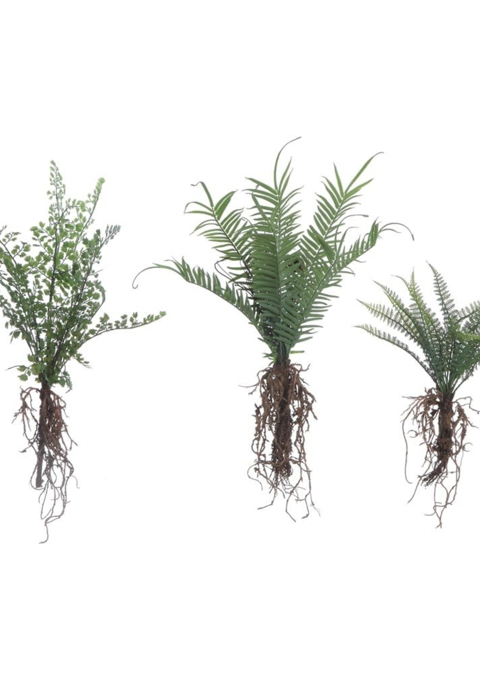 Faux Ferns w/ Exposed Roots