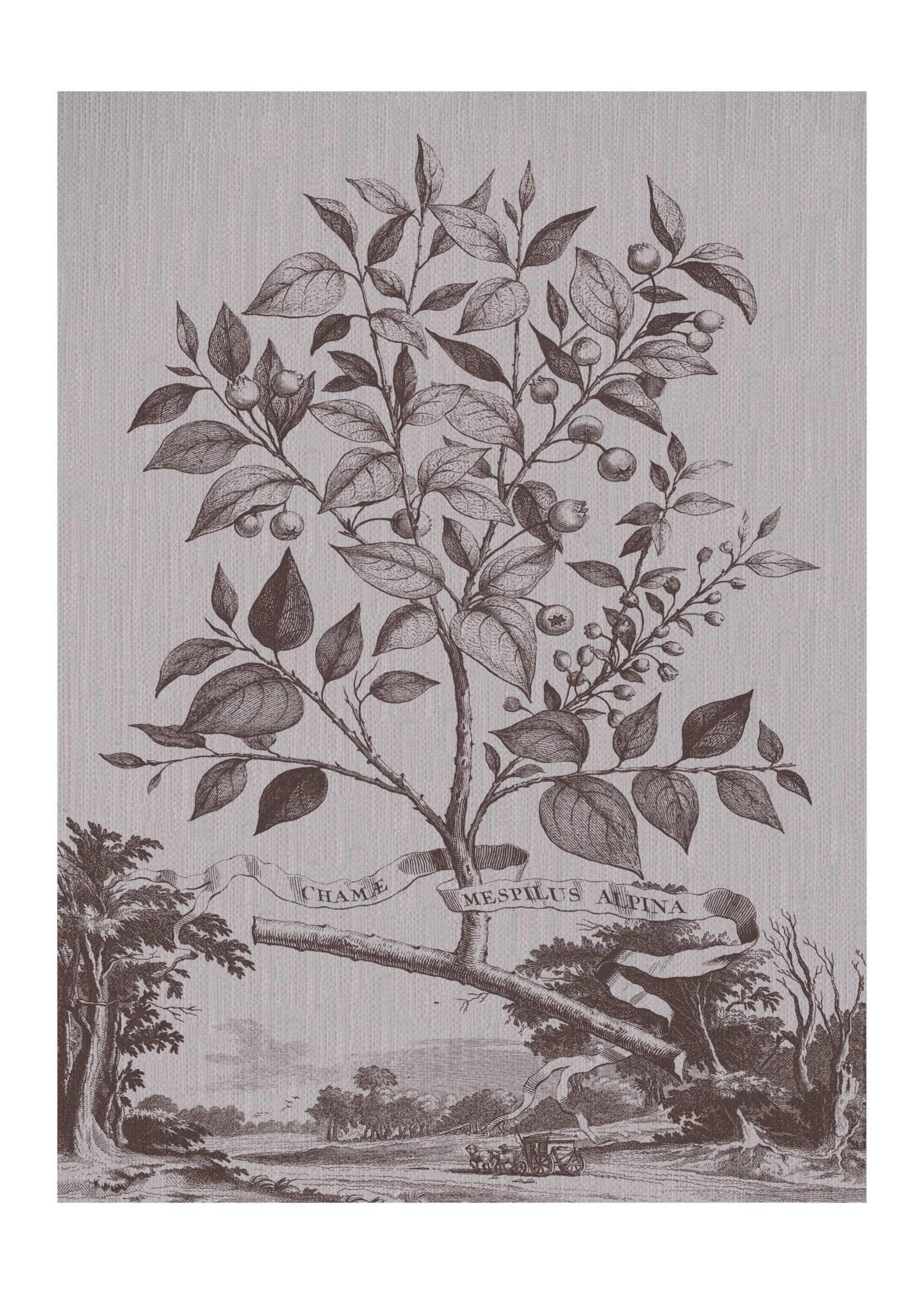 Muntings Tree-Botanical