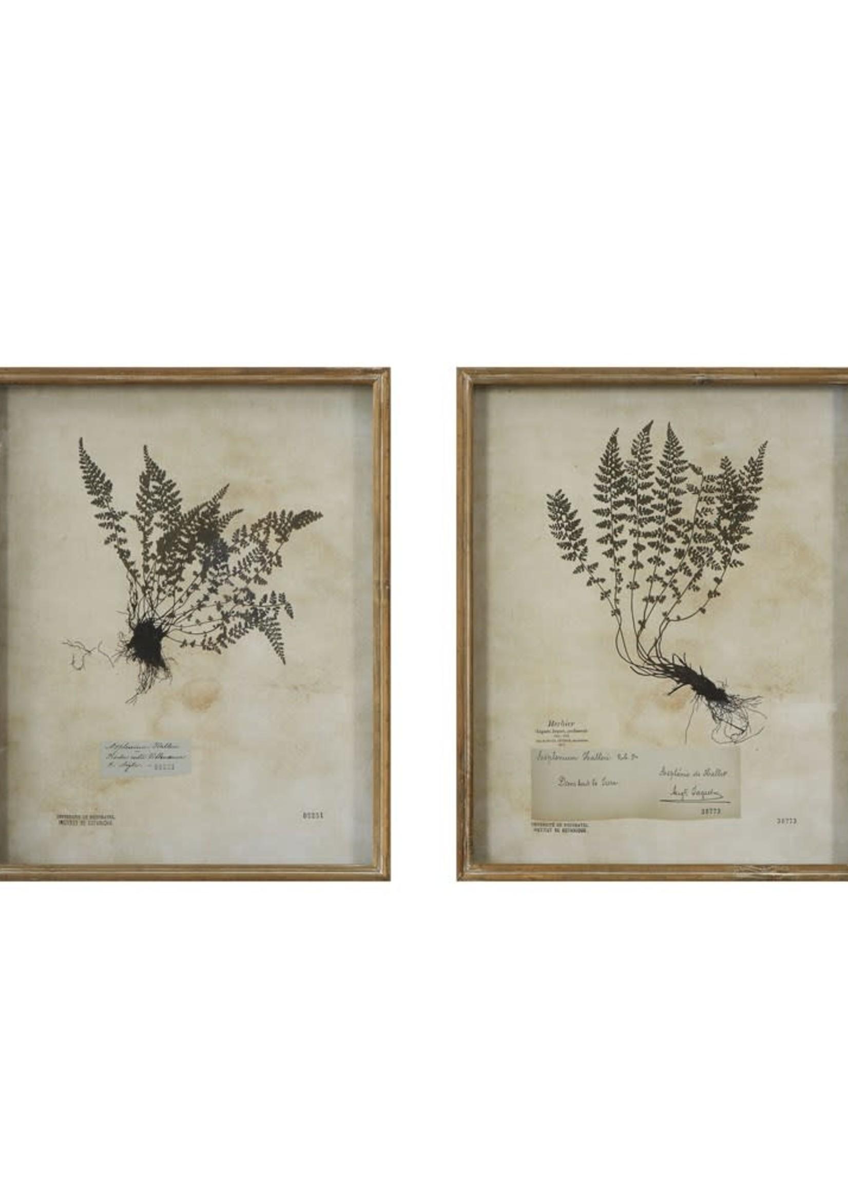 """17""""L x 2""""W x 21""""H Wood Shadow Box Framed Wall Decor w/ Vintage Reproduction Fern, 2 Styles"""