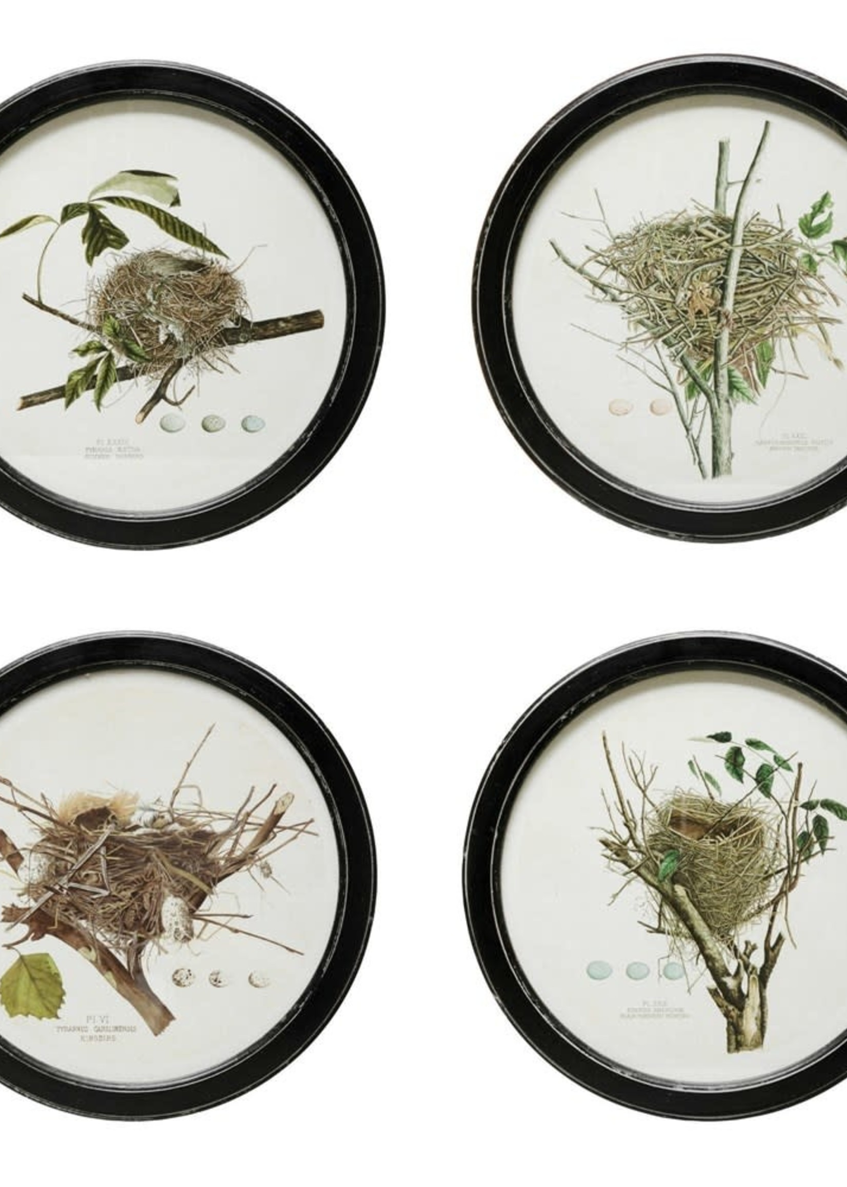 """13-3/4""""Round Mdf Wall Decor, Vintage Reproduction Nest Print, 4 Styles"""