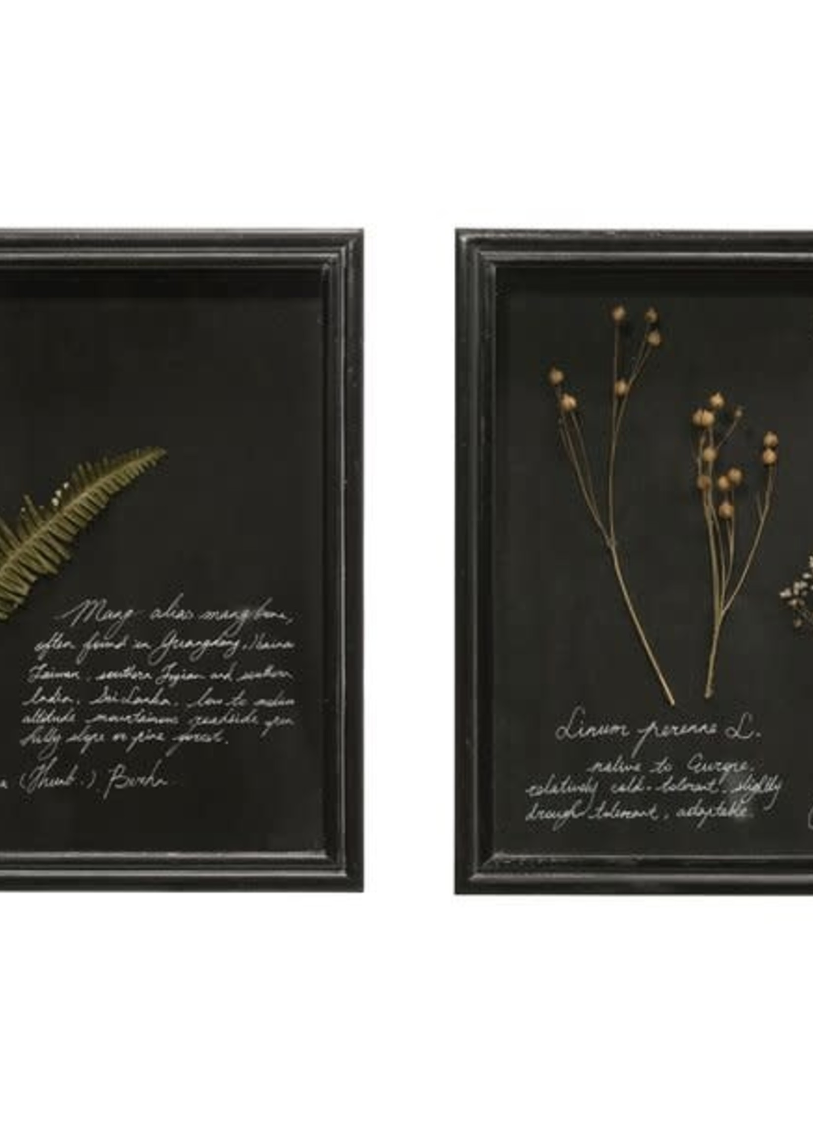Dried Botanicals in Square Shadowbox Frame
