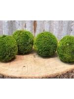 Moss Ball Medium