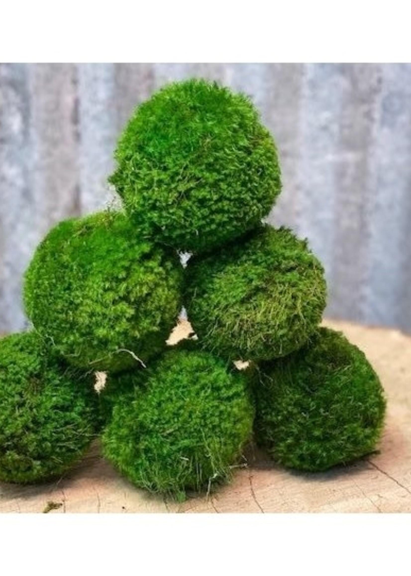 Moss Ball Small