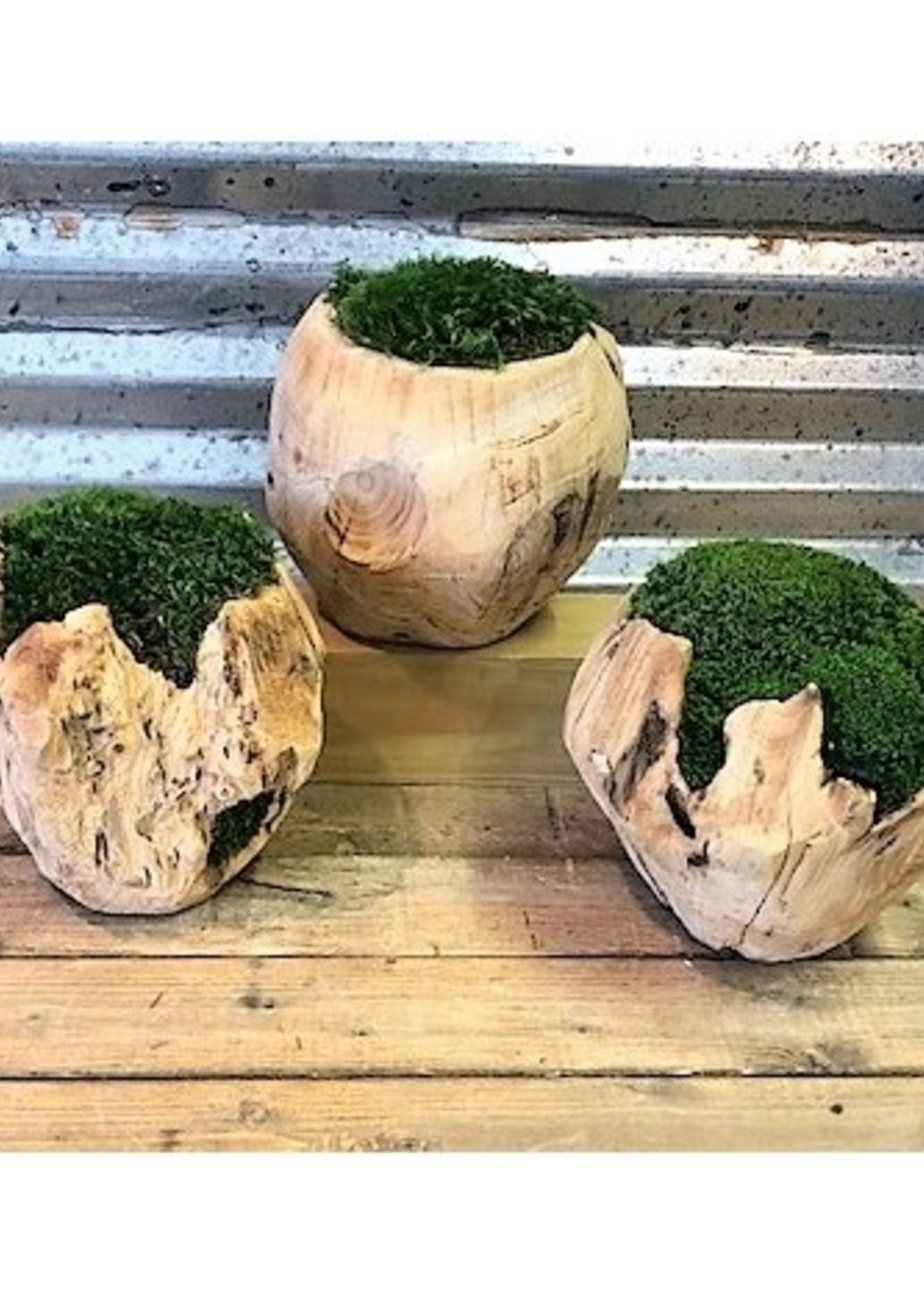 """Mossed Wood Sphere 8"""" Small"""
