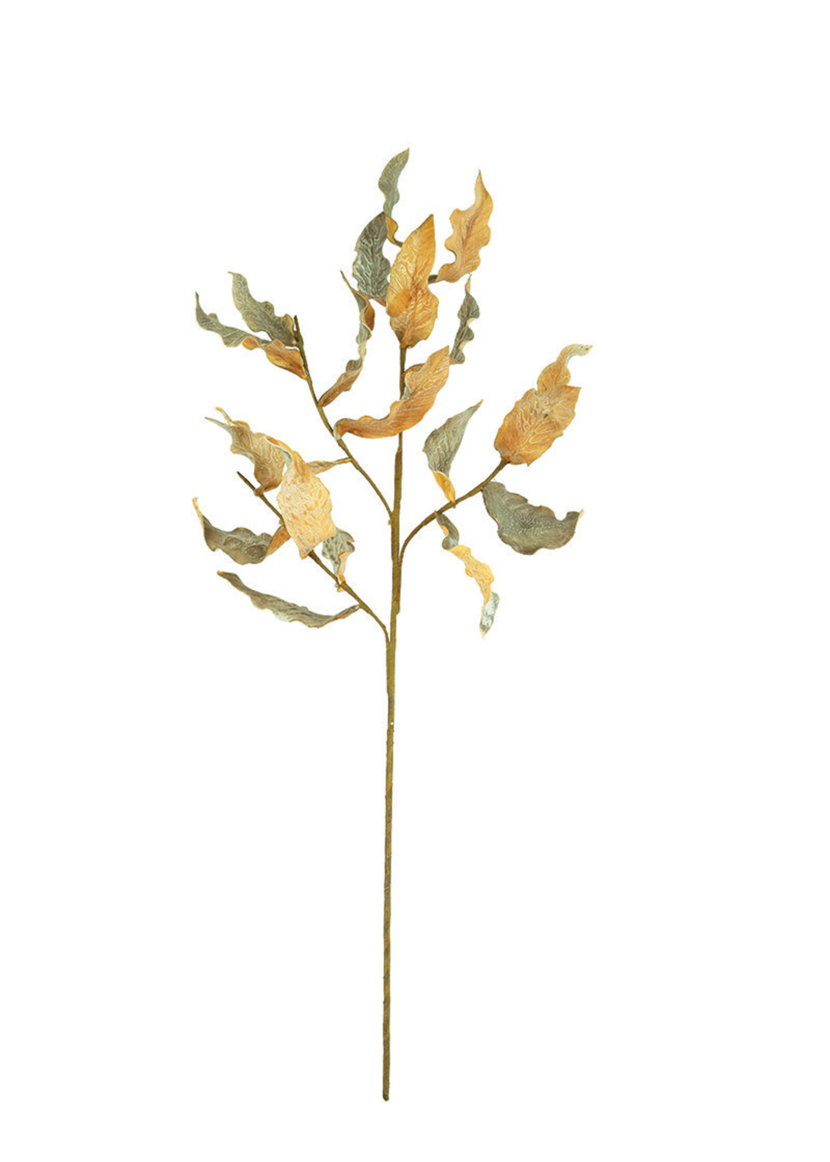 Botanica #3269