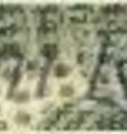 Canvas ALLIGATOR BELT  TTB146