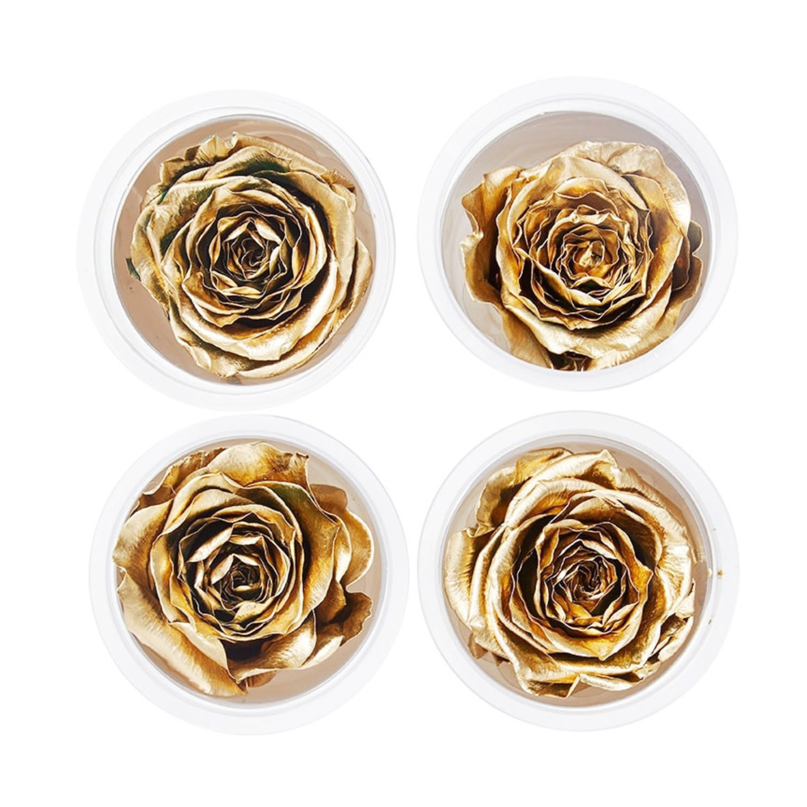 Wyld Blue Home Preserved Gold Roses