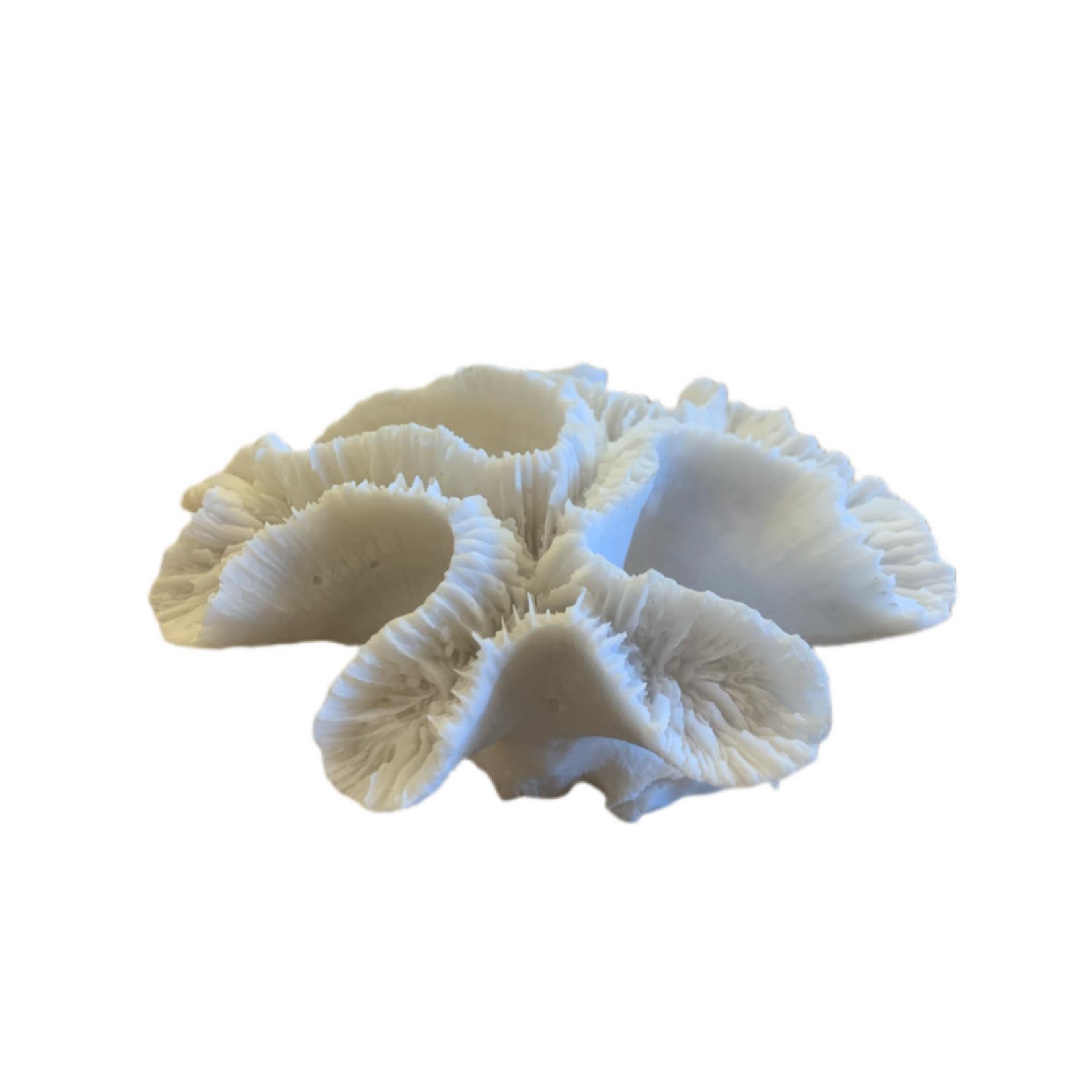 Wyld Blue Home Foliose Coral Decor