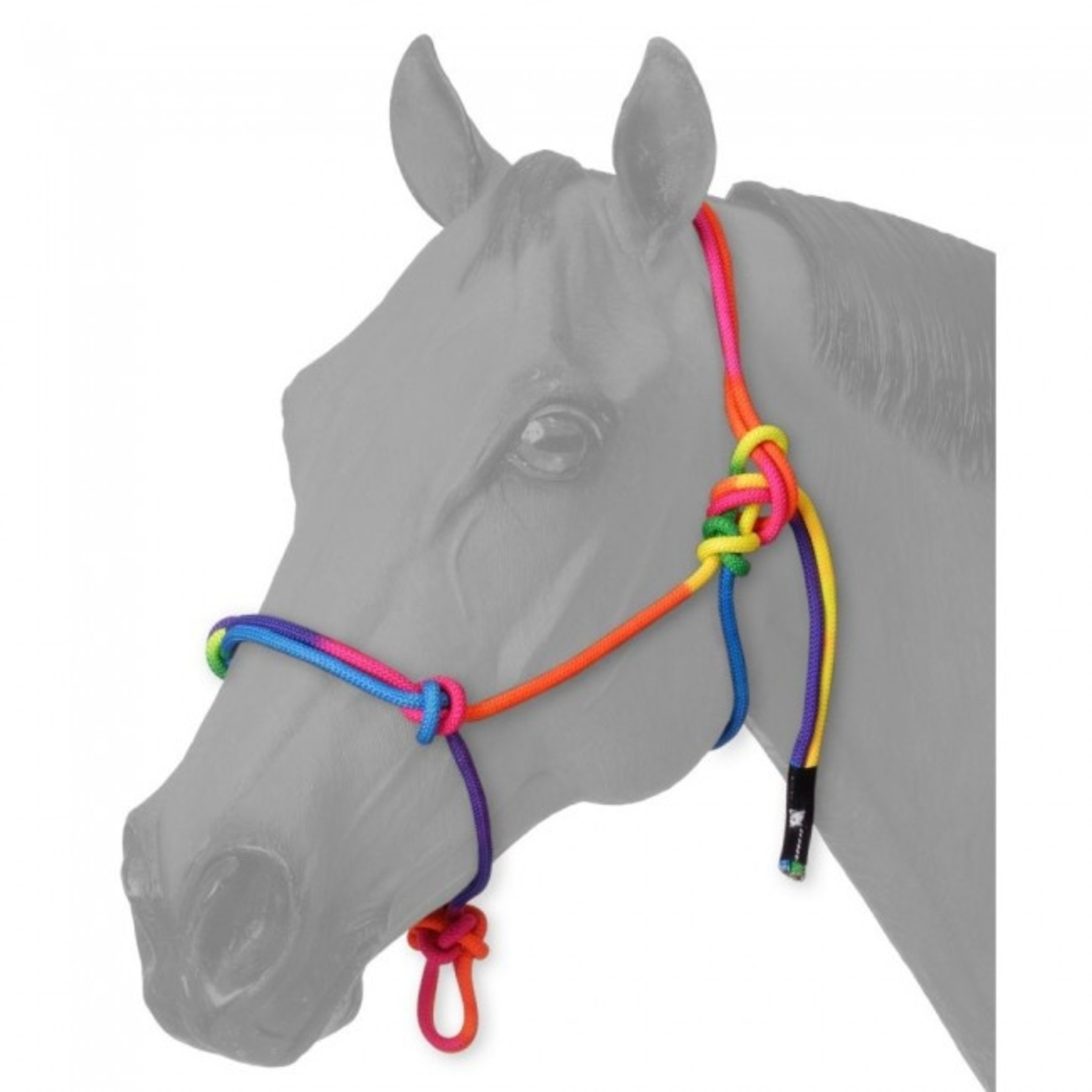 Mini Rope Halter Multi