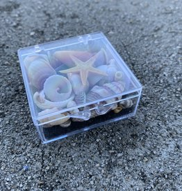 SHELL TREASURES BOX