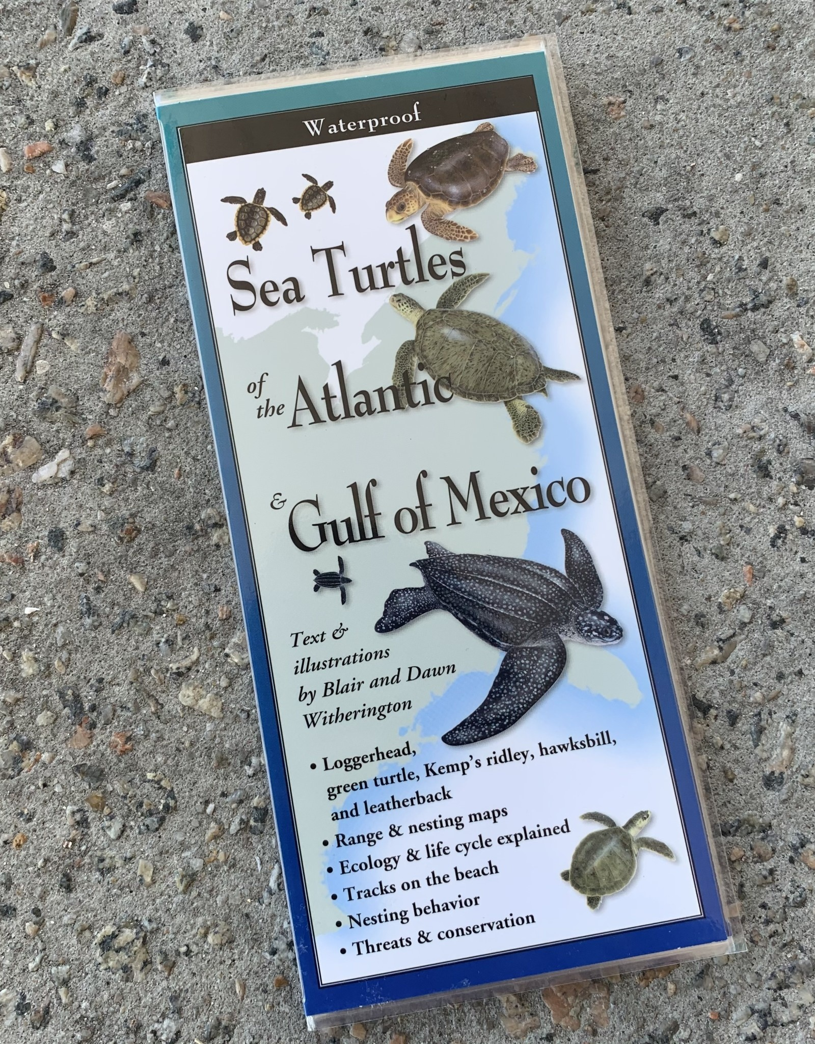 FOLDING GUIDE SEA TURTLES OF THE ATLANTIC