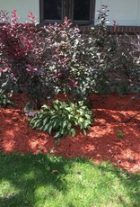 Dyed Red Mulch