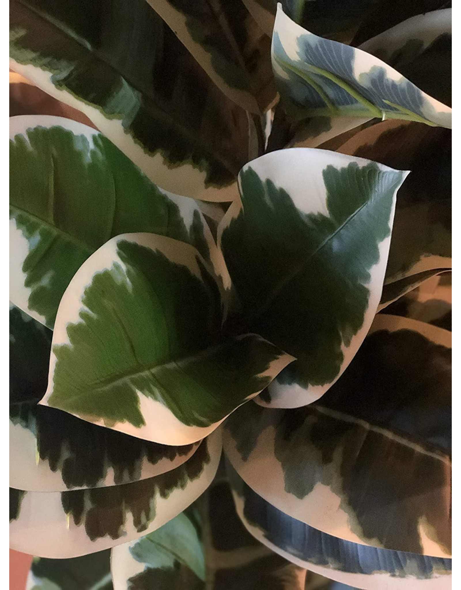 """AMERIQUE AMERIQUE Gorgeous & Rare 6 Feet Oak Artificial Plant Tree with 93 Leaves, in 8"""" Nursery Pot, Real Touch Technology, Super Quality Tech, Green"""
