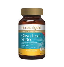 Herbs of Gold Olive Leaf 7500 60T