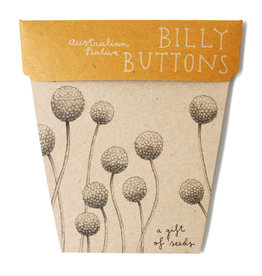 Sow 'N Sow Gift of Seeds - Billy Buttons