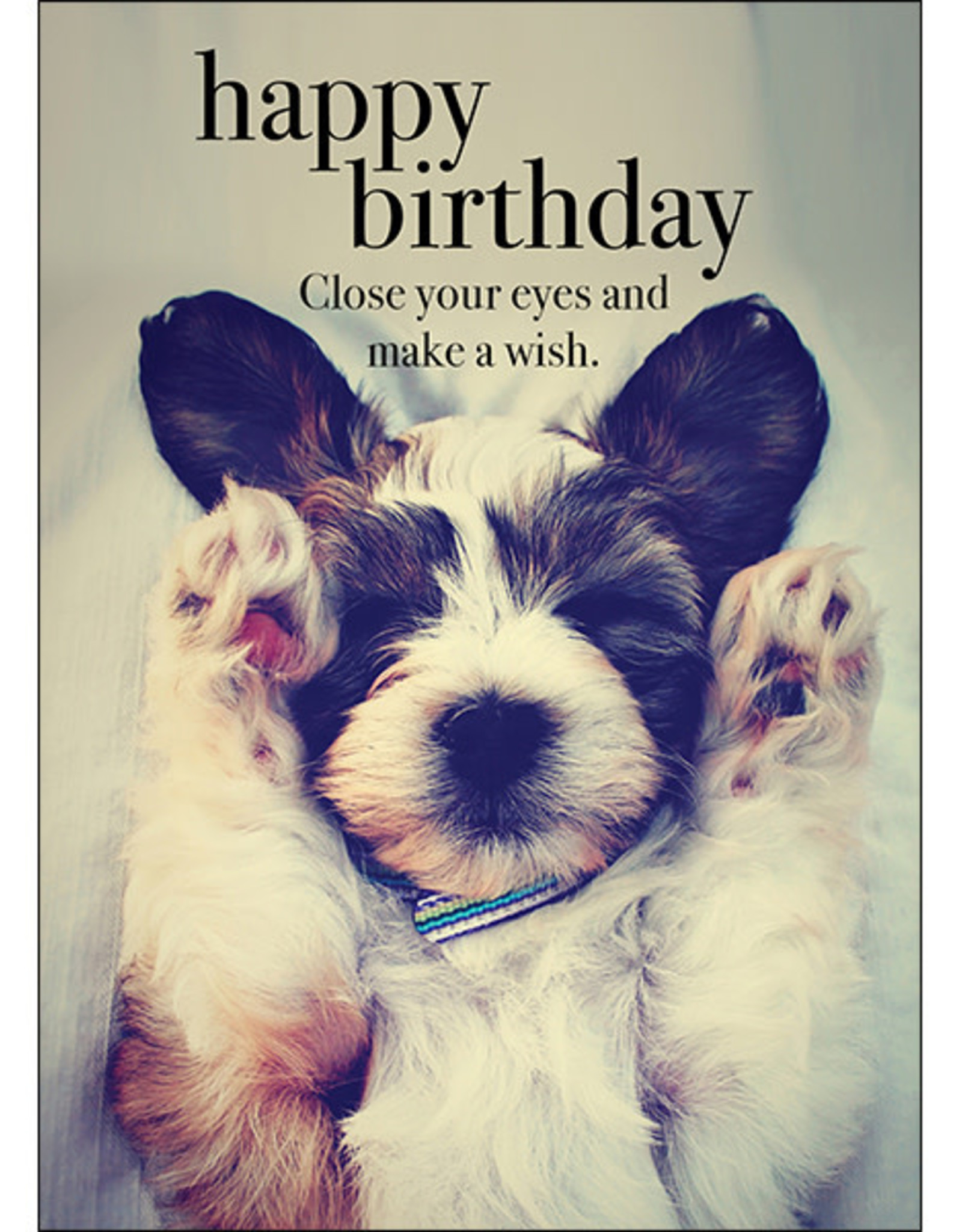 Affirmations Publishing House Happy Birthday Animal Greeting Card