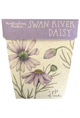 Sow 'N Sow Gift of Seeds - Swan River Daisy